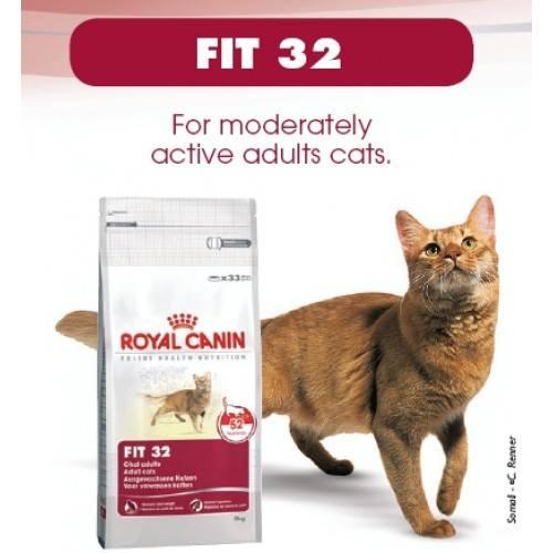 Глистогонное для кошек: симптомы, последствия и способы